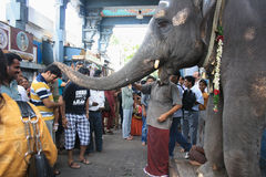 Elephant Blessing Devotees in Ganesha Temple Stock Image