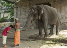 Elephant blessing at the Mahalingeswarar Temple. Royalty Free Stock Image
