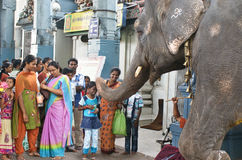 Elephant blessing people in India. Temple elephant blessing with his trunk touch hindu people, Pondicherry, tamilnadu, India Royalty Free Stock Photo