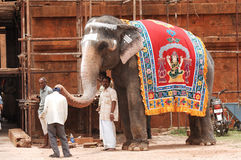 Elephant blessing people with the trunk Stock Images
