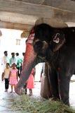 An elephant blessing a pilgrim at Virupaksha temple royalty free stock images