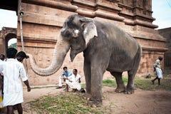 Elephant blessings pilgrims at Hindu Brihadeeswarar Temple. India Stock Image