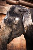 Elephant blessings pilgrims at Hindu Temple Stock Images