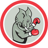 Elephant Boxer Boxing Circle Cartoon Stock Image