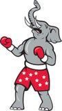 Elephant Boxer Boxing Stance Stock Image