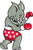 Elephant Boxer Boxing Stance. Cartoon illustration of an elephant boxer with boxing gloves and stars shorts as republican mascot Royalty Free Stock Photos