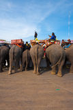 Elephant Breakfast Rear End V Royalty Free Stock Images