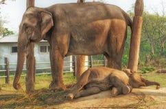 Elephant Breeding Centre in Chitwan, Nepal Stock Photo