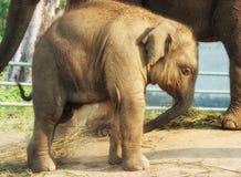 Elephant Breeding Centre in Chitwan, Nepal royalty free stock photo