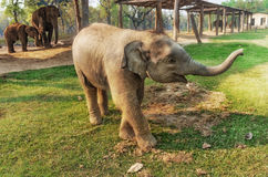 Elephant Breeding Centre in Chitwan, Nepal Royalty Free Stock Photos
