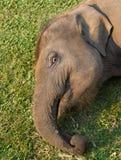 Elephant Breeding Centre in Chitwan, Nepal Royalty Free Stock Photos