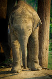 Elephant Breeding Centre in , Nepal Stock Photo