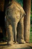 Elephant Breeding Centre in , Nepal Stock Photo