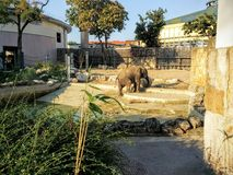 Elephant in the Budapest zoo. Bushes and sand. Stone wall. A baby elephant Stock Images
