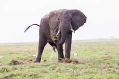 Elephant Bull in Chobe NP Royalty Free Stock Photography