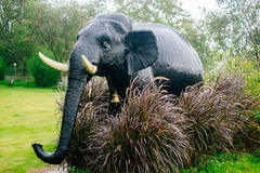 Elephant - Bush Stock Photo