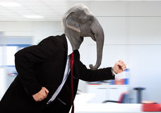 Elephant business man in a hurry Stock Image