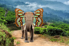 Elephant with butterfly wings. Close elephant with butterfly wings in nature Royalty Free Stock Photos