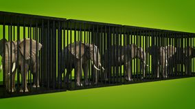 Elephant in cage. Royalty Free Stock Photo