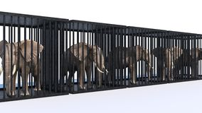 Elephant in cage. Stock Images
