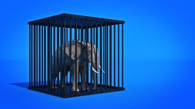 Elephant in cage. Stock Image