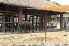 Elephant in cage. Thai elephant in the cage in zoo royalty free stock images