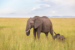 Elephant calf with his mother Stock Photography