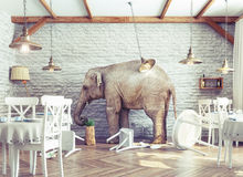 Elephant calm in a restaurant interior. An elephant calm in a restaurant interior. photo combination concept Royalty Free Stock Photography