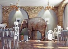 An elephant calm in the  restaurant. An elephant calm in a restaurant interior. photo combination concept Stock Photo
