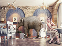 An elephant calm in the  restaurant Stock Photo