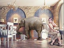 An elephant calm in the restaurant. An elephant calm in a restaurant interior. photo combination concept vector illustration
