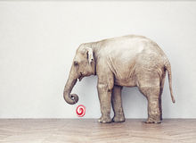 An elephant calm Stock Images