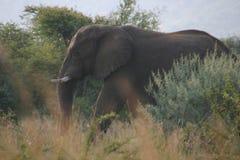 Elephant camouflage stock image