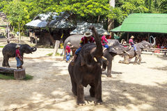 Elephant Camp in Chiangmai Stock Image