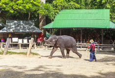 Elephant Camp in Chiangmai Royalty Free Stock Photos