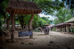 Elephant camp Royalty Free Stock Images