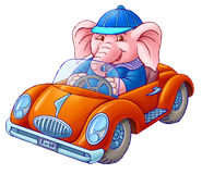 The elephant in the car. The elephant cheerful sits the red car Stock Photo