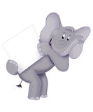 Elephant card. An illustrated cartoon of an elephant holding a white card, isolated on a white background Royalty Free Stock Image