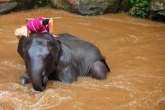 Elephant caretaker Stock Photos