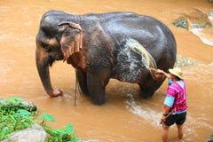 Elephant caretaker is bathing elephant Stock Photo