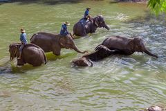 Elephant caretakers riding elephants in Maetaeng River in the beautiful Maetaman Valley, Chiang Mai, Thailand stock images