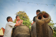 Elephant carries children Stock Photography