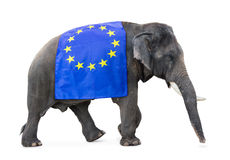Elephant carries a flag EU Royalty Free Stock Photos