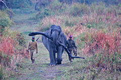 Elephant carrying log with guards in Kaziranga Stock Image