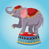 Elephant cartoon of circus. Elephant cartoon icon. Circus carnival and festival theme. Colorful  design. Vector illustration Royalty Free Stock Photo