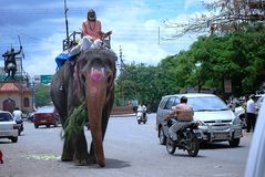 Elephant causing traffic jam on Indian roads. Indian roads are notorious for chaos -Cars, trucks, vans, scooters, bicycles, elephants, cows, camels, pariah dogs Royalty Free Stock Photo