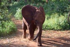 Elephant charge Royalty Free Stock Image