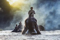 Elephant. CHIANG MAI,THAILAND,elephants taking a bath with mahout,Cute asian elephant taking a bath in river,Visitors can visit nature closely in Chiang Mai royalty free stock photography