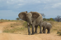 Elephant with child Royalty Free Stock Images