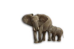Elephant with child Stock Photography